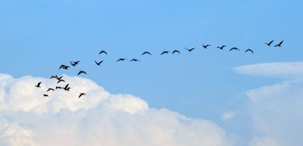 Core App Migration